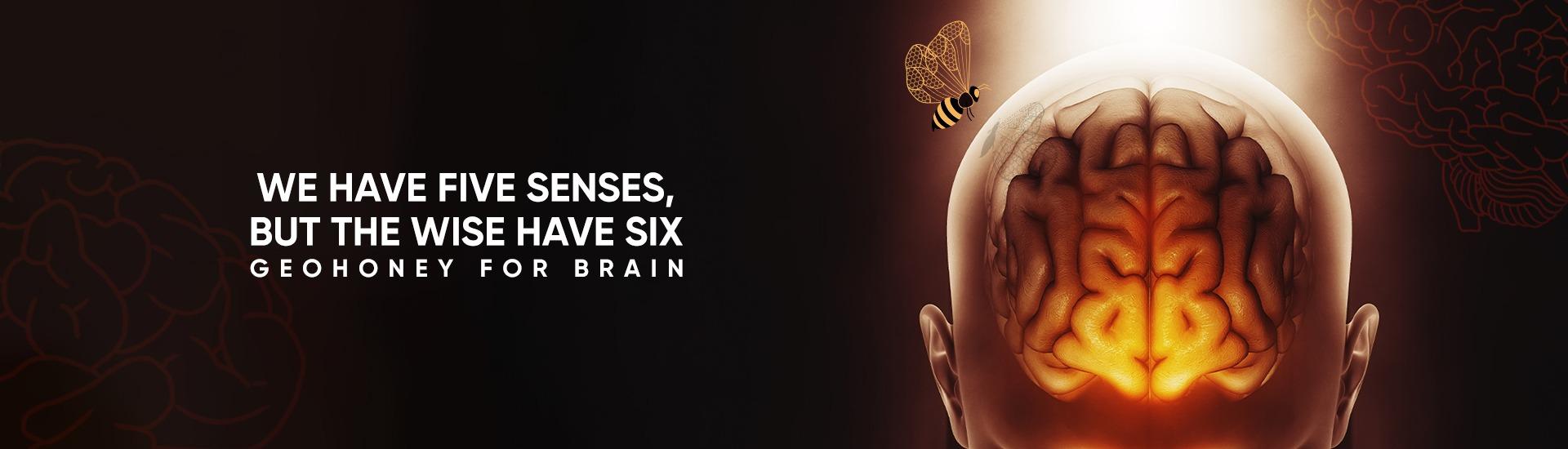 داعم الدماغ