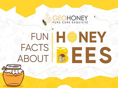 Fun Facts about Honey Bees