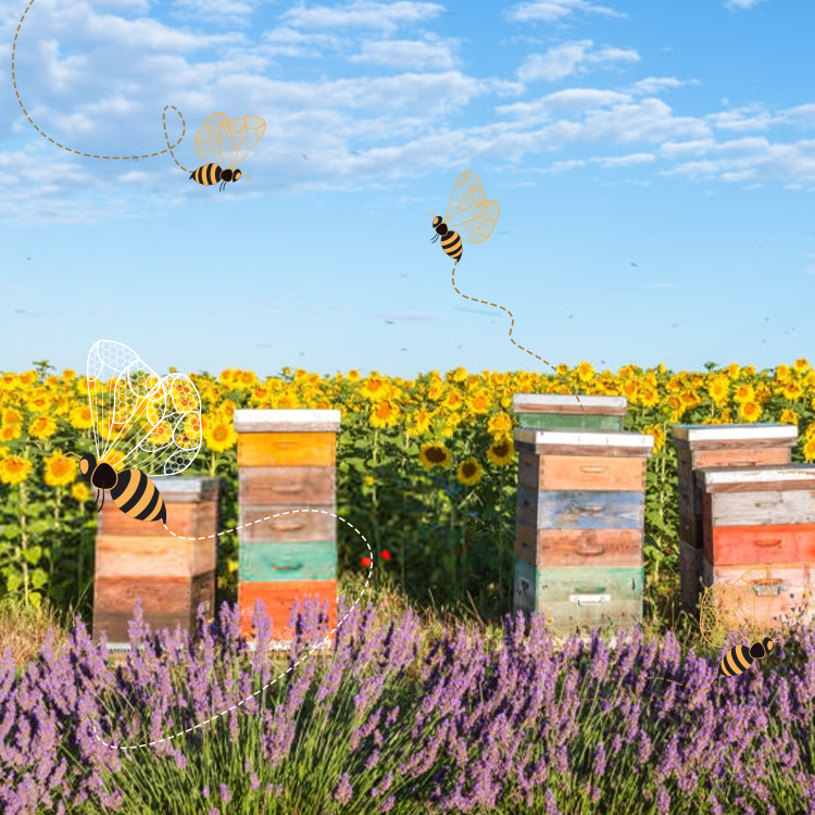 How To Protect Honey Bees in Beekeeping