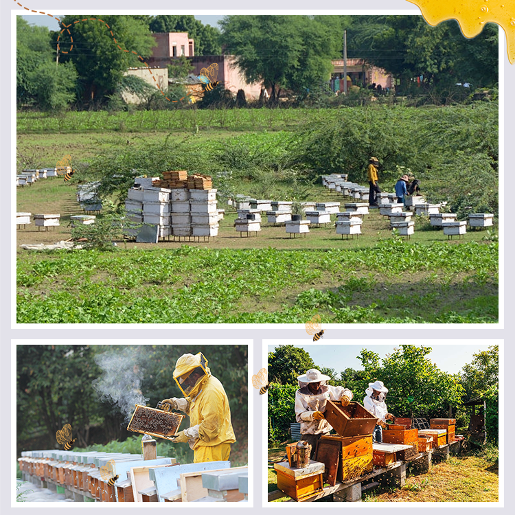 Beekeeping in India