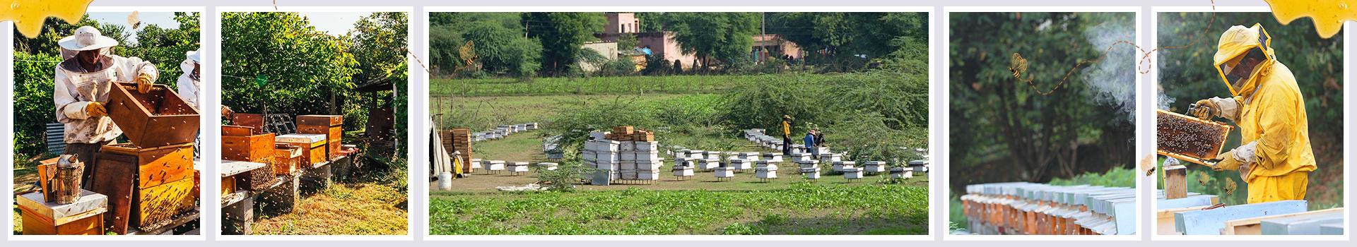Beekeeping in India - GeoHoney