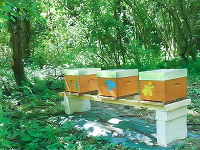 Fruitful Trees For The Lovely Bees That Help Producing The Best Honey