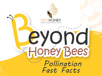 Beyond Honey Bees: Pollination Fast Facts