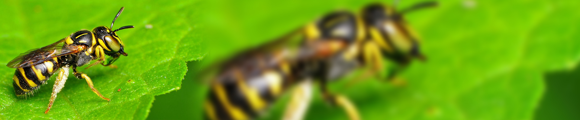 The Apidae Family: Everything You Need To Know About This Honey Bees Specie