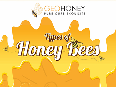 Main Types Of Honey Bees