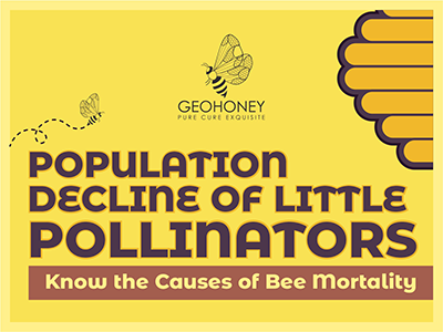 Population Decline Of Little Pollinators: Know The Causes Of Bee Mortality