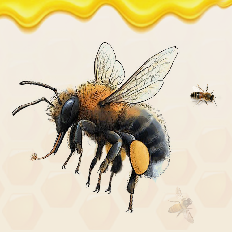 Incredible Body Structure of Honey Bees