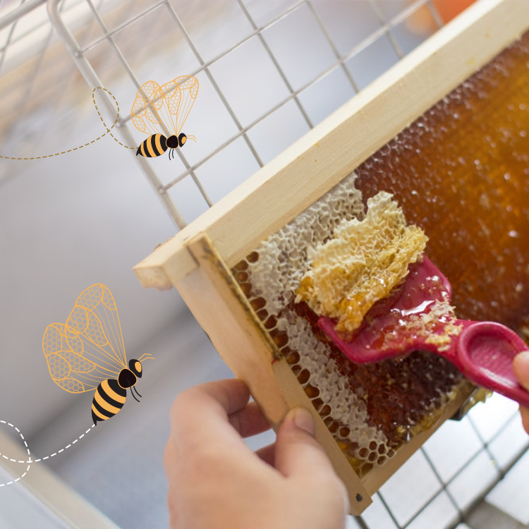 Honey & Beeswax Extraction in Beekeeping