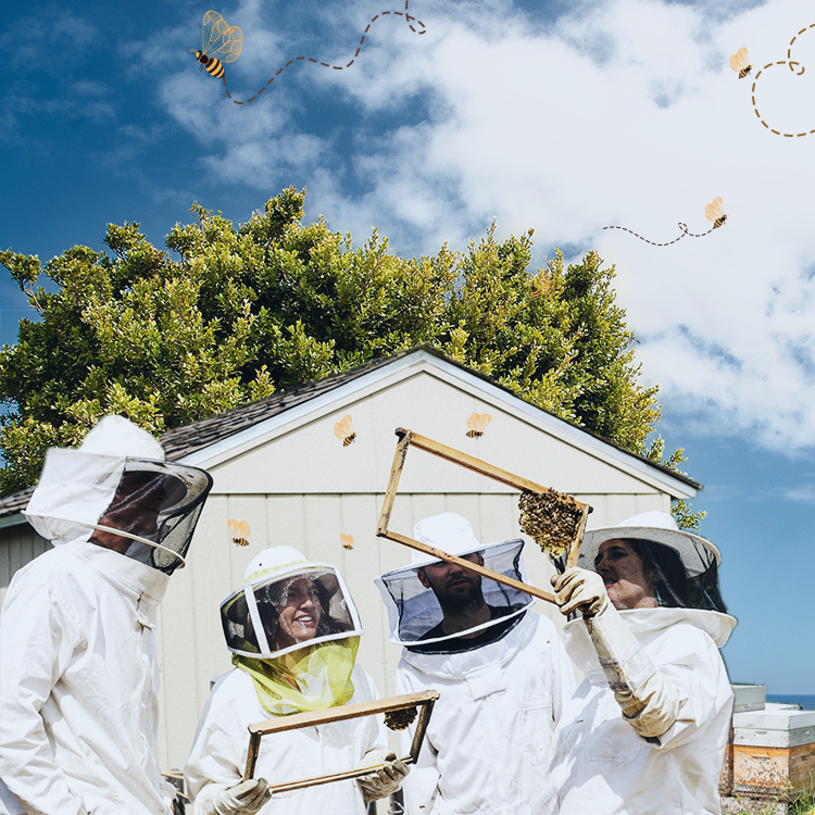 Honey Beekeeping Tips For Beginners