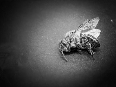 Veterinary Diagnostic Of Honey Bee Diseases: A Valuable Approach To Save Little Pollinators
