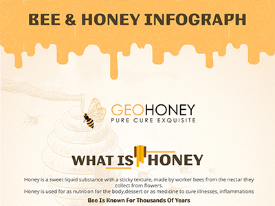 Bee & Honey Infograph