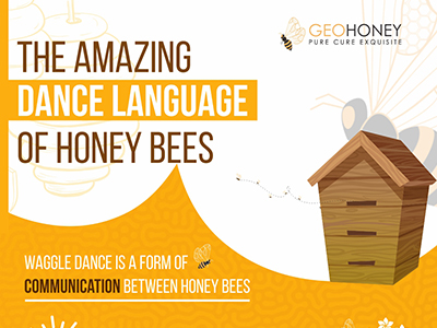 The Amazing Dance Language of Honey Bees