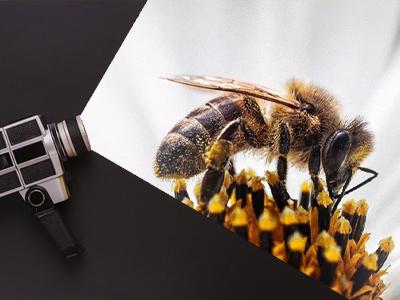 Video Recordings Are A New Way Of Understanding Rare Honey Bee Behaviors