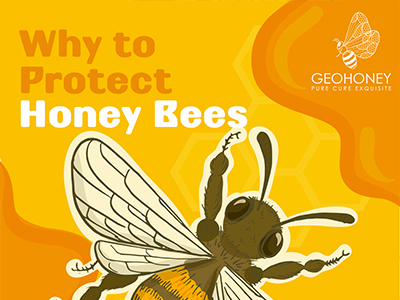 Why To Protect Honey Bees?