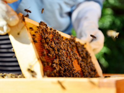 An All-Inclusive Guide To Learn How And Where To Build Up Your Own Honey Bee Colonies