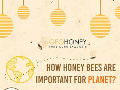 How Honey Bees Are Important For Planet