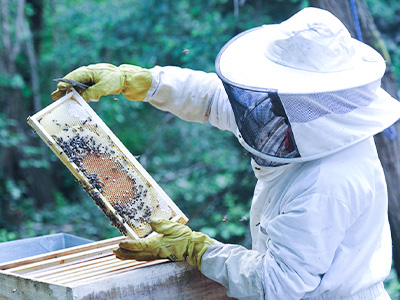 Apiculture – All You Need To Know About Its Importance In Human Lives