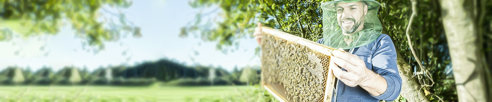 Honey Bee Farming As A Hobby: A Great Step To Minimize The Decrease Of Honey Bee Population