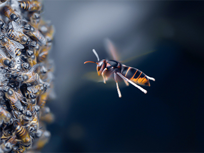 Wonderful Facts About Honey Bees That Are Sure To Fascinate The Kids