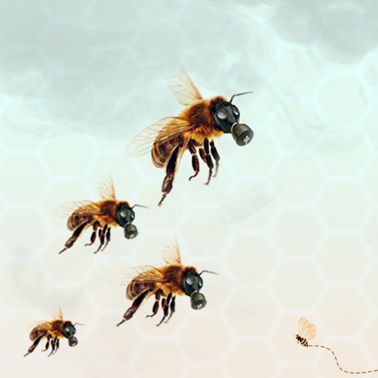 Honey Bee Health Issues: Potential Reasons Of Bee Colony Collapse