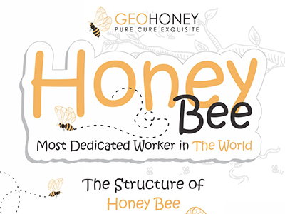 Honey Bee - Most Dedicated Worker in The World