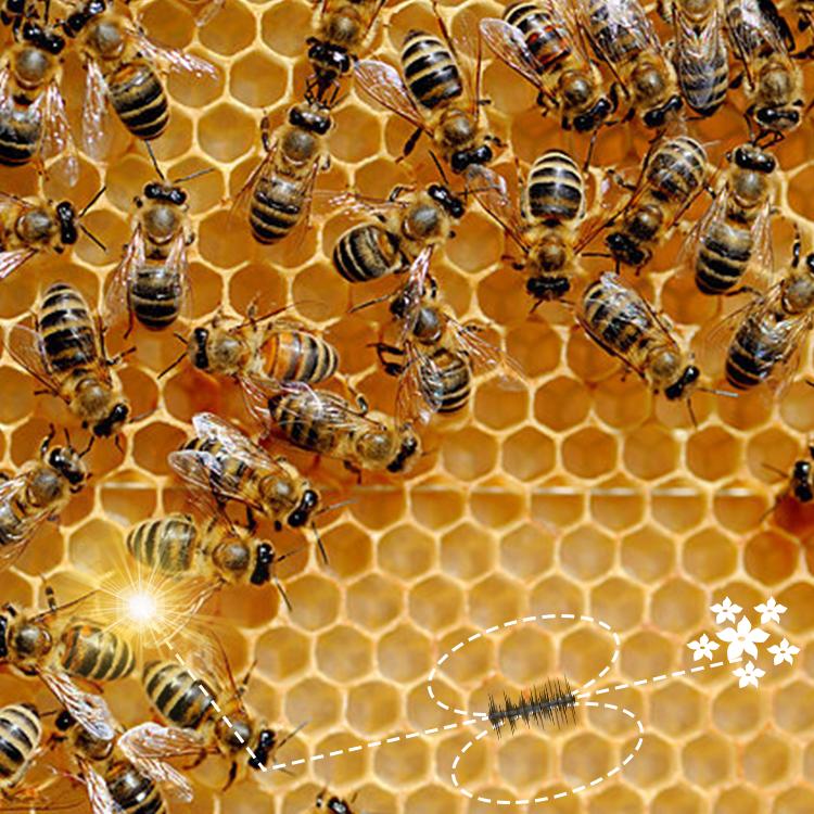 Fascinating Honey Bee Dance