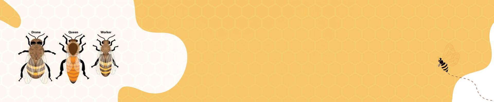Honey Bee Colonies - Geohoney