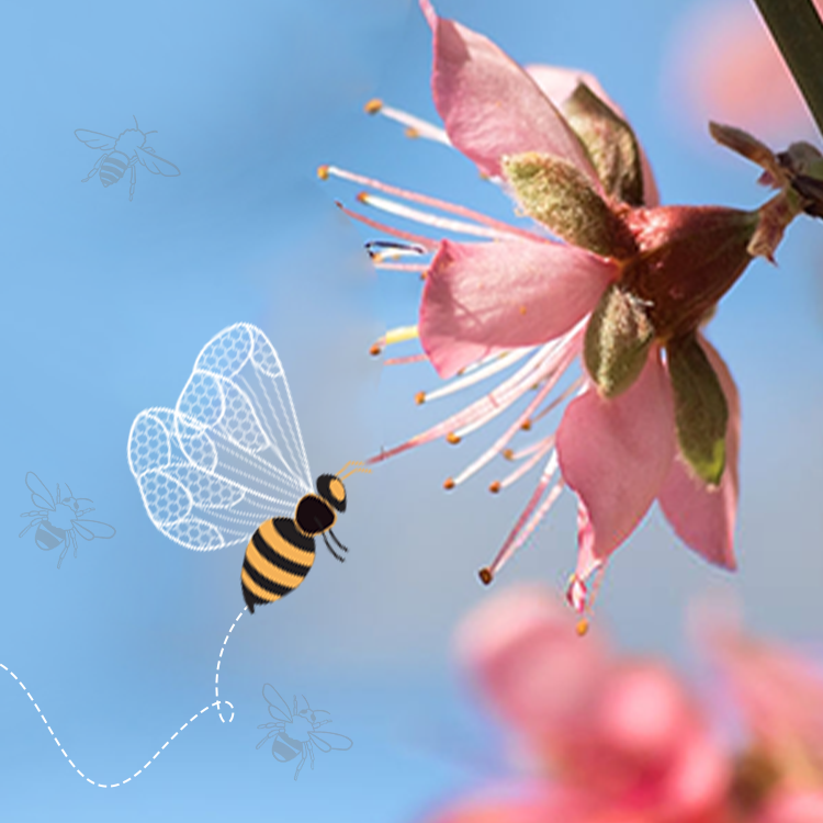 Significance of Pollination in Beekeeping