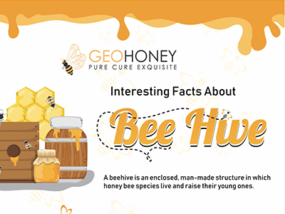 Interesting Facts About Bee Hive