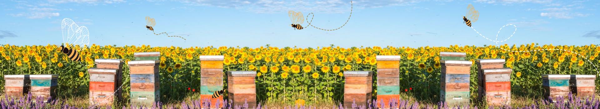 Honey bees in beekeeping - Geohoney