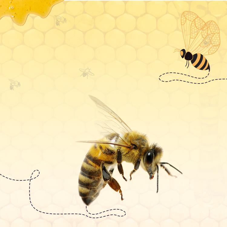 Anotomy of Honey Bee