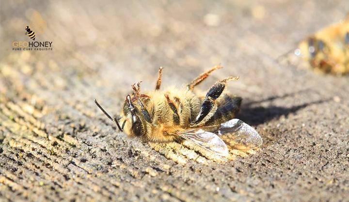 Chronic Bee Paralysis
