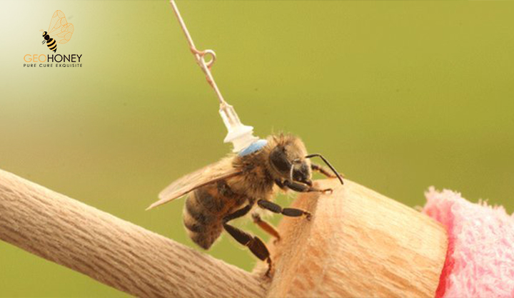 THE-ROLE-OF-ORIENTATION-FLIGHTS-ON-HOMING-PERFORMANCE-IN-HONEYBEES
