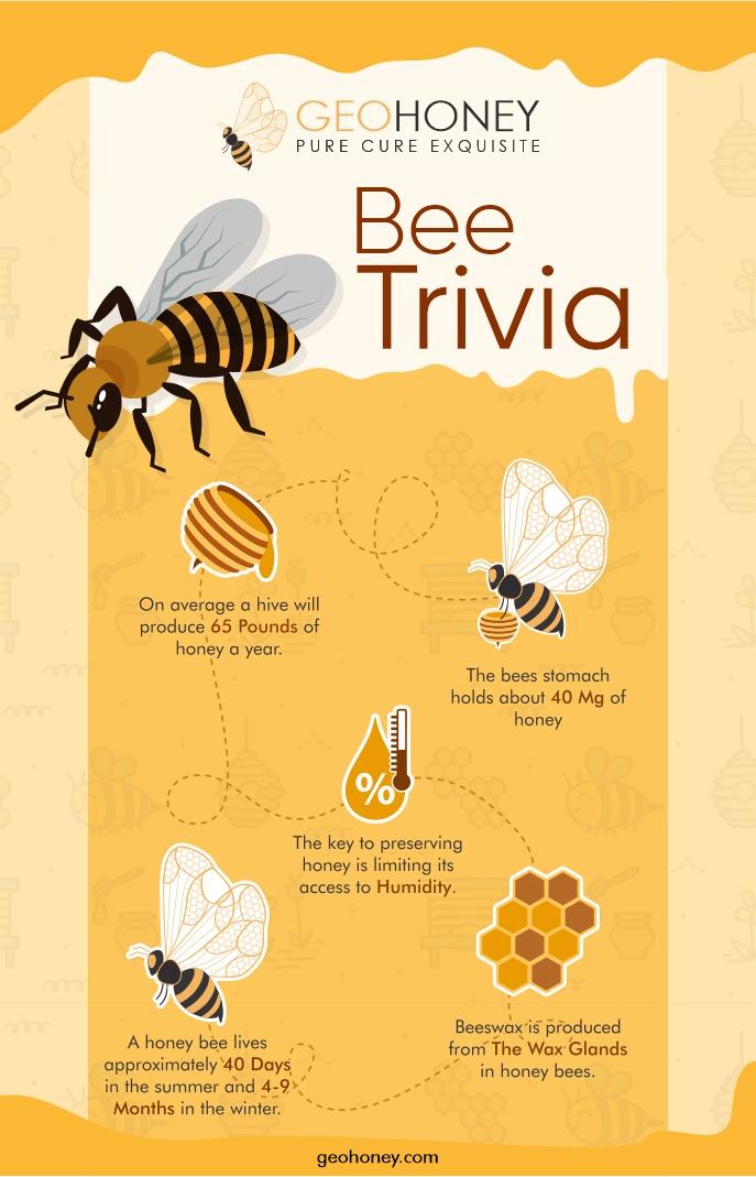 Bee Trivia - Geohoney