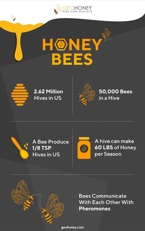 Honey Bees - Geohoney