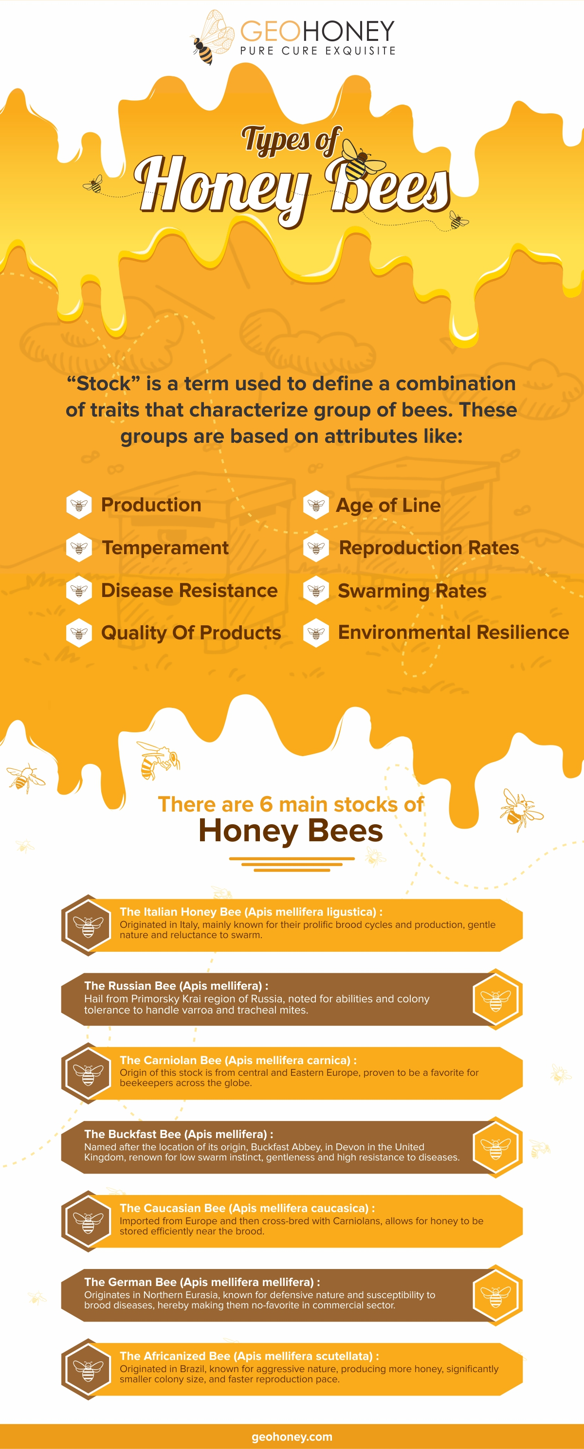 types of honey bees - Geohoney